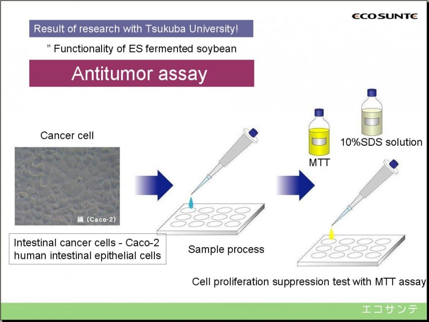 Antitumor assay