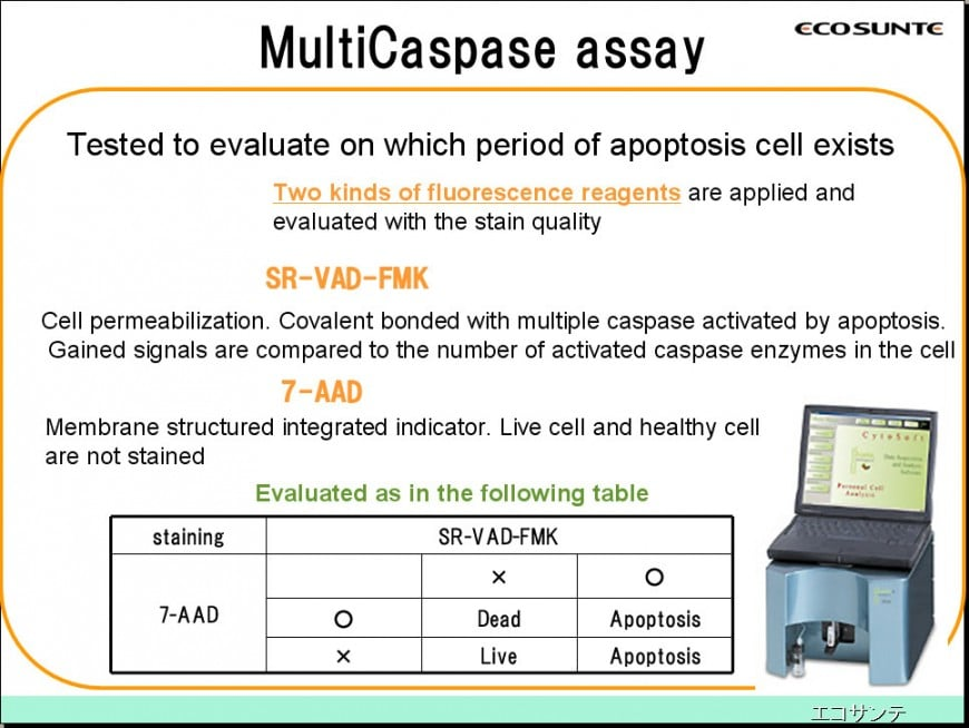 Apoptosis inductive effect test